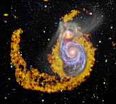 Whirlpool Galaxy,composite radio image