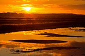 Salt marsh at sunset,Norfolk,UK