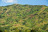 Deforestation for land to grow maize