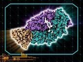 Pembrolizumab drug molecule