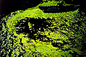 Bioluminescence or phosphorescence on the ocean