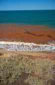 Red Tide off the coast of Australia