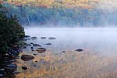 Foliage,New Hampshire