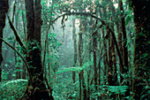Tropical cloud forest,Costa Rica