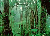 Tropical cloud forest in Costa Rica
