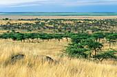 Masai Mara,Kenya