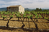 Old farmhouse and vineyards