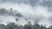 Mist covering rainforest, Ecuador