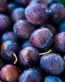 Fresh plums with droplets of water