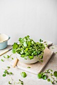 Fresh watercress in a bowl on a chopping board