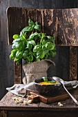 Ceramic bowl of carrot soup, served with fresh basil, croutons, kitchen towel and spoon on old wooden chair