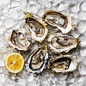 Open Oysters and lemon on ice