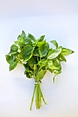 A bunch of fresh basil against a white background