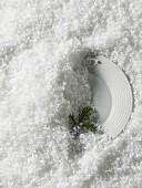 Teller mit Tannenzweig im Schnee