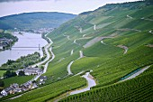 Vineyards by the river Model on the slops of the Wehlender Sonnenuhr winegrowing region of Germany