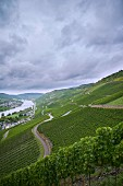 Vineyards by the river model on the slopes of the Wehlener Sonnenuhr winegrowing region of Germany