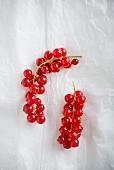 Zwei Rispen rote Johannisbeeren auf Papier (Draufsicht)