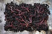 Elderberrys (seen from above)