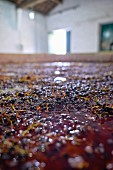Port wine after the treading of grapes at the Dirk Niepoort wine estate in the Douro Valley in Vale de Mendiz, Portugal