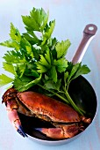 A crab in a stainless steel frying pan with celery leaves