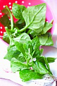 Fresh New Zealand spinach in a dish
