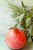 A Hokkaido pumpkin, sage and rosemary