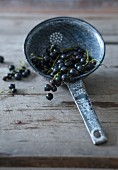 Blackcurrants in a colander