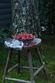Sommerbeeren auf Holzstuhl im Garten