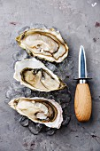 Open oysters on ice and knife on gray concrete background