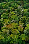 Rainforest canopy aerial view,Congo