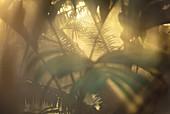 Rainforest vegetation,foliage and palms