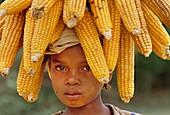 Child carrying harvest maize,Madagascar