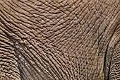 Elephant skin,Etosha,Namibia