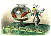 Goldfish in a bowl,19th century