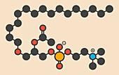 Platelet Activating Factor molecule