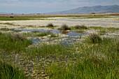Salt marsh,Lesbos,Greece