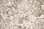 Coral cement wall,Zanzibar