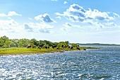 Rinderzucht auf der kleinen Insel Öhe, Ostsee, Deutschland