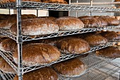 Loaves of Graham bread baked in a wood-fired oven on metal shelves in a bakery