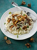Risotto with forest mushrooms