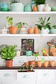 Verschiedenes Geschirr, Tontöpfe und Pflanzen auf weißen Regalbrettern