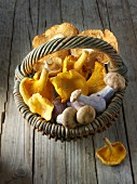 Freshly picked chanterelle mushrooms, hedgehog mushrooms and Pied Bleu mushrooms in a basket