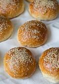 Several sesame buns