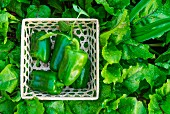 Close-up of green peppers in a basket on green leaves