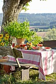 Fruit and basil plant on table set for picnic