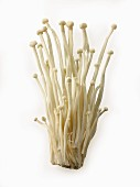 Fresh picked cultivated Enokitake, Enokidake or Enoki (Flammulina velutipes) commonly known as golden needle mushroom or lily mushroom, an edible mushroom