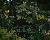 RHEUM PALMATUM, Primula florindae, ALCHEMILLA MOLLIS