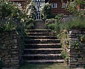 Treppenanlage mit Kletterrose 'THE GARLAND'
