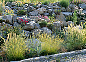 Steingarten mit Armeria maritima / Grasnelke, Dianthus / Nelke