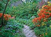 Weg mit Rhododendron 'Klondyke', Kerria japonica 'Plena',